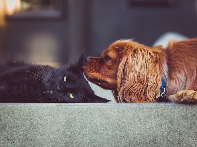 ventajas y desventajas aceptar mascotas en alquileres vacacionales