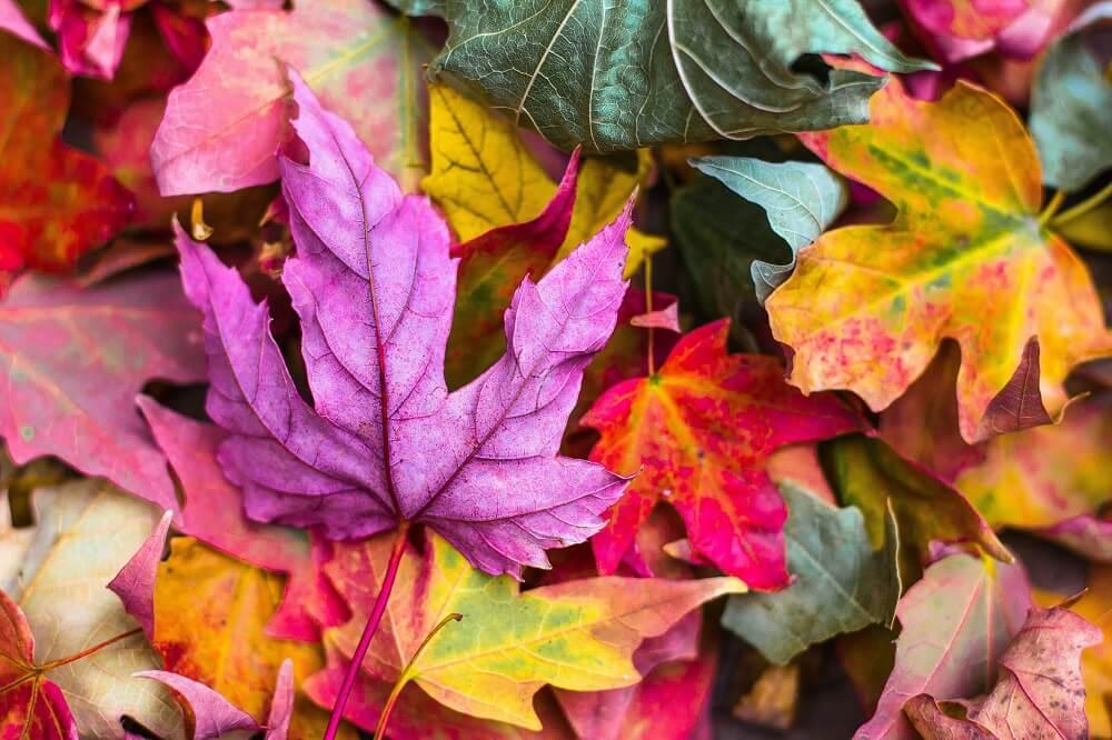 Cómo incentivar las reservas de tu alquiler vacacional en otoño