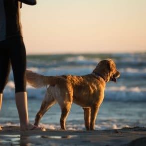 Convierte tu alquiler vacacional en dog-friendly