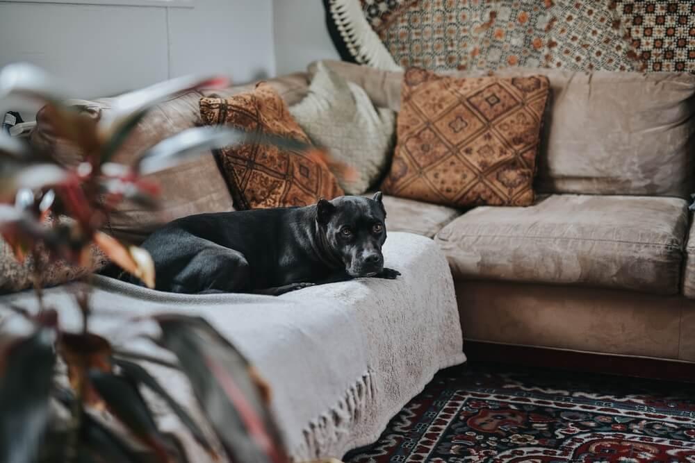 permitir perros en el sofá
