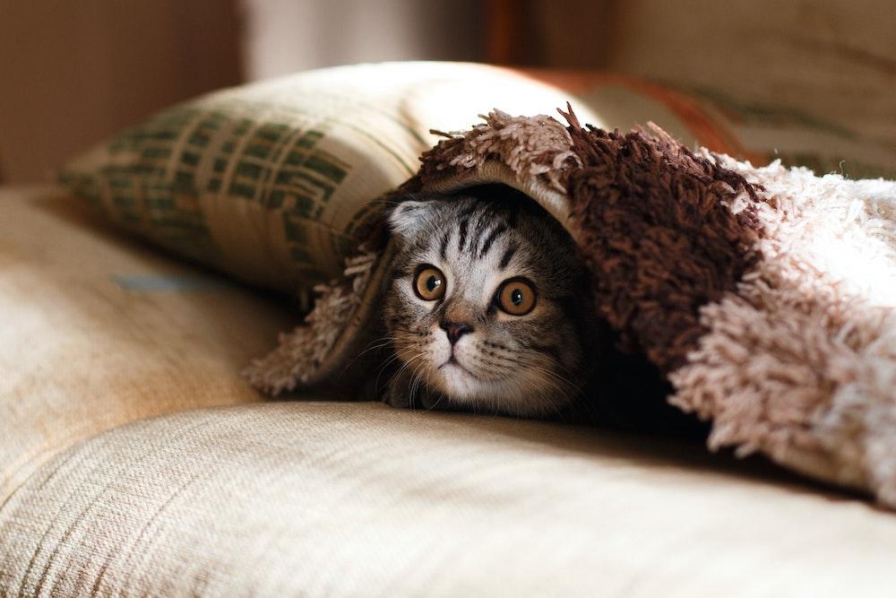 Equipez votre maison de fournitures pour animaux