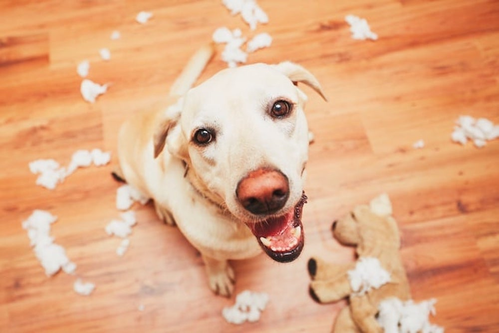 Les risques de dommages avec les animaux domestiques